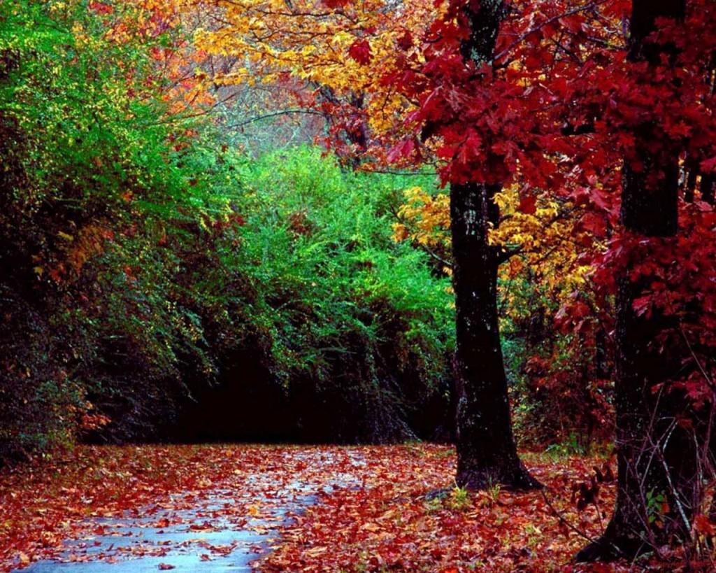 LES DEFAUTS DE LA PERSONNALITE paysage-d-automne