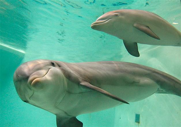 maman dauphin et s