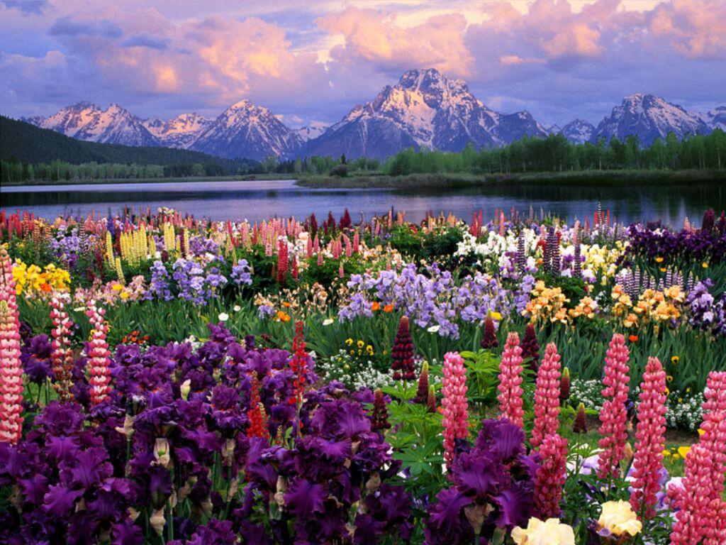 montagnes et fleurs