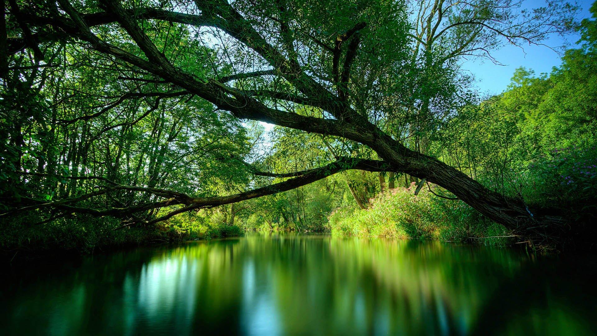 superbe image nature