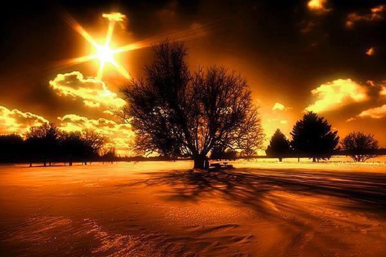 arbre magnifique coucher du soleil